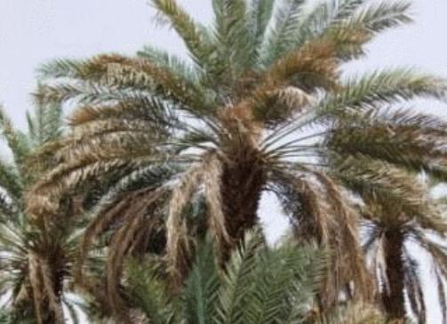 salman-al-farsi